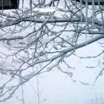 恵みの雪か!