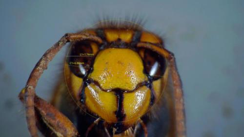 迷い込んだスズメバチ