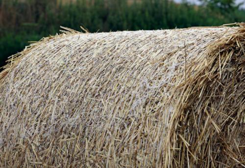 型崩れしないように表面にはネットで覆われている。